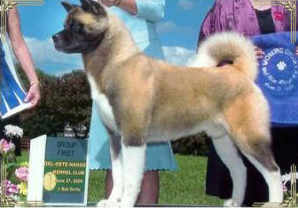Ch. Regalia's Cutting Edge of Grandslam, Akitas, Akita Puppies